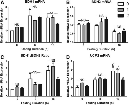 Re-feeding induced changes in hepatic a β-OH butyrate dehydrogenase I (BDH1), b β-OH butyrate dehydrogenase II (BDH2), c BDH1:BDH2 mRNA expression ratio, and d uncoupling protein 2 (UCP2) mRNA expression. *Denotes a significant difference from 0 h fasting within re-feeding duration (P < 0.05). a,b Bars that do not share a common letter differ significantly within fasting duration (P < 0.05; n = 3–6). NS, no significant differences within a fasting duration (P > 0.05)