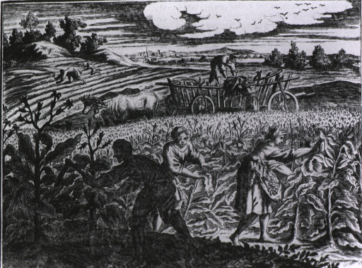 <p>The cultivation and harvesting of tobacco is taking place in a large field; an ox-drawn cart is being loaded with tobacco leaves. In the foreground a man is tilling the soil while women harvest leaves; to the rear, workers are planting more tobacco.</p>