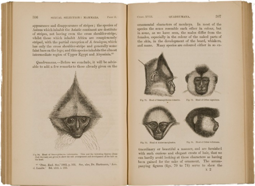<p>Image of facing pages (p. 306-307) from The descent of man, and selection in relation to sex / by Charles Darwin. London : John Murray, 1871. Pages 306 and 307 have illustrations of the heads of five different types of monkeys, two shown in profile, and three in frontal view. The figures are given to show the odd arrangement and development of hair on the head.</p>
