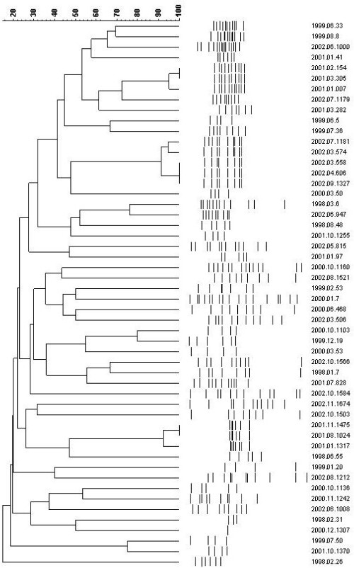 AP-PCR profiles of S. maltophilia strins including statistical analysis and dendrogram showing the genetic relationship between strains.