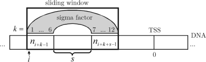 Graphical illustration of the parameters k, s and i from Equation (2). ni+k−1 and ni+k+s−1 reference the k-th nucleotide and (k+s) -th nucleotide, respectively, of the sliding window situated at position i with respect to the transcription start site (TSS, position 0).