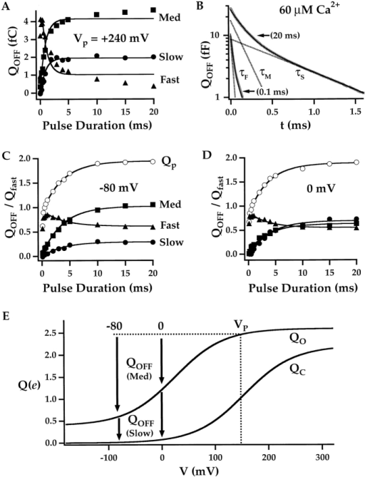 Predictions of the allosteric model. (A) QOFF component amplitudes determined after pulses to +240 mV in 0 Ca2+ are plotted versus pulse duration. The fast component is reduced to <10% of the total OFF charge after a 20-ms pulse. The relaxation of all three components is fit by exponential functions (solid lines) with a τ = 0.91 ms. (B) The decay of QOFF–Qss is plotted on a semilog scale after 0.1- or 20-ms pulses to +160 mV in 60 μM Ca2+ (HP = −80). The 0.1-ms trace is fit by a triple exponential function (solid line, τF = 23.8 μs, τM = 150 μs, τS = 822 μs) and the 20-ms trace is fit with a double-exponential (τM = 150 μs, τS = 822 μs), indicating that the fast component is eliminated when most channels are opened. Dashed lines represent the two components of the 20-ms fit and the fast component of the 0.1-ms fit. (C) Normalized QOFF component amplitudes and total OFF charge (Qp) are plotted versus pulse duration for pulses to +160 mV in 0 Ca2+. OFF components were measured upon repolarization to −80 mV and are normalized to the fast component of ON charge (Qfast) at +160 mV. (D) When QOFF is measured upon repolarization to 0 mV, the Fast component and Qp are unchanged. However, the Medium component decreases and the Slow component increases in a complementary manner. (E) The charge distributions predicted by the allosteric model for Closed (QC) and Open channels (QO) are plotted versus voltage (zJ = 0.55 e, Vh(J) = 155 mV, L = 2 × 10−6, zL = 0.4 e, D = 17). Arrows indicate the predicted amplitudes of Medium and Slow OFF components at repolarization voltages of −80 and 0 mV after a pulse to +160 mV (VP).
