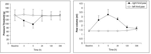 Effect of carrageenan on noxious pressure threshold and paw volume. The carrageenan was injected in the plantar surface of the right paw (2%, 0.1 ml). Left Graph. Noxious pressure threshold was measured by Analgesia-Meter (Ugo Basile). Right Graph. Volume measured by a plethysmometer. Data expressed as mean ± SD. The threshold to noxious pressure in the right hindpaw, decreased after carrageenan injection, recovered the next day and was equal to the threshold in the left hindpaw for the whole period of observation (up to 28d).