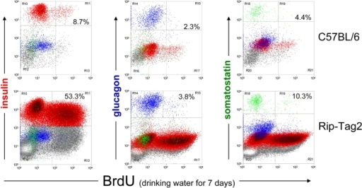 Detection specificity of multiparameter flow cytometry of continuously in vivo BrdU-labeled islet cells.Mice aged 7–9 weeks were given BrdU at 1 mg/ml in their drinking water continuously for 7 days. Islets were isolated, dissociated, and 4-color stained for insulin (red), glucagon (blue), somatostatin (green), and for incorporated BrdU. BrdU incorporation (x-axis) was plotted for the endocrine islet cell subsets from naïve, C57BL/6 (top panel), and insulinoma-developing yet non-symptomatic Rip-Tag2 Tg mice. Percentages indicate the relative frequency of BrdU-stained, single cells among the particular endocrine subset identified by hormone staining. Note that depending of the stage of insulinoma development, the frequency of glucagon+ α-cells and somatostatin+ δ cells are correspondingly reduced among all islet cells acquired from purified islets of insulinoma carrying mice.