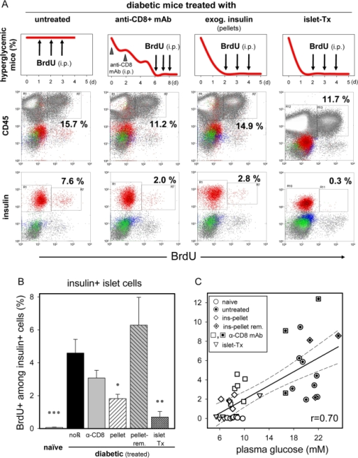 Reduced islet β-cell BrdU uptake in diabetic mice treated to restore normoglycemia.Diabetic Rip-CD80+GP+ mice were randomly assigned for treatment groups to normalize BG levels, followed by BrdU pulse labeling (3 doses indicated by arrows of 1.5, 1.0, 1.0 mg/mouse i.p. over the final 3 days of the experiment), and islet cell analysis by flow cytometry. A: Treatment regimen, expected and exemplified results are illustrated in columns. β-cell BrdU incorporation was increased in the presence of untreated hyperglycemia (lower panel). Note that both the abundance and BrdU incorporation of islet infiltrating CD45+ leucocytes was essentially unchanged among treatment groups (middle panel). B: BrdU-uptake of islet β-cells is controlled by BG levels. Groups of treated diabetic mice (no℞, n = 8; anti-CD8 mAb, n = 6; s.c. insulin pellet, n = 4; ins-pellet removed, n = 3; islet-Tx, n = 7) were compared to age-matched, naïve mice (n = 7). Results are shown as mean±SE, with the following significance levels: (*) p<0.05, (**) p<0.01, and (***) p<0.001. C: Correlation plot between the final 3-day average random BG readings (x-axis) and the frequency of BrdU+ islet β-cells (y-axis). Each symbol represents a single mouse, and all mice, regardless of treatment group are included. Correlation coefficient r = 0.70; 95% confidence interval (dashed lines).