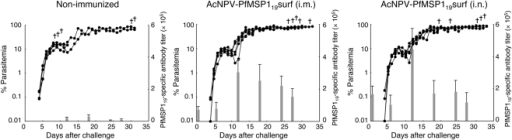 Kinetics of PfMSP119-specific antibody titers and parasitemia during the course of infection.Groups of mice were non-immunized or immunized either i.m. or i.n. with AcNPV-PfMSP119surf, and then challenged i.v. with 103 Pb-PfM19 pRBC. Parasitemia was monitored daily 4 days after challenge and sera were collected periodically post-challenge to measure antibody titers. The bar chart indicates PfMSP119-specific antibody titers on the left vertical axis. The line graph indicates the course of parasitemia (%) on the right vertical axis. (+), death.