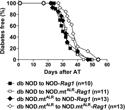 Reciprocal adoptive transfers (ATs) were performed into immunodeficient NOD-Rag1 females expressing either mt-Nd2 allele as recipients and splenic leukocytes from diabetic NOD or diabetic conplastic donors (NOD.mtALR). Splenocytes from these donor mice were collected and erythrocytes removed using hypotonic solution treatment. Cells were injected intravenously (tail vein) at 2 × 107 cells/mouse into age-matched female recipients. The source of the mitochondrial population in either diabetic donor splenocytes or in Rag1 recipients did not significantly affect rate of diabetes development in NOD recipients.