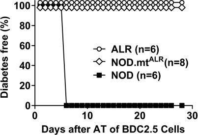 NOD-mtALR mice are completely resistant to type 1 diabetes mediated by transfer of diabetogenic CD4+ T-cell clone BDC2.5. BDC2.5 T-cell clones were injected into NOD, NOD.mtALR, or ALR/LtJ mice. Development of diabetes after injection was monitored using Diastix, with a diagnosis of type 1 diabetes called after positive tests on 2 sequential days. AT, adoptive transfer.