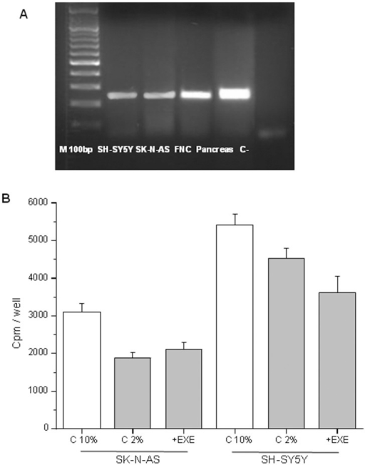 Expression of GLP1R and cell proliferation assays.RT-PCR analysis of the expression of the GLP1R in all the neuronal cell lines and in pancreas taken as the positive control. Amplicon length = 240 basepairs M 100 bp = Molecular weight marker 100 basepairs (A). Cell proliferation assay performed in SK-N-AS and SH-SY5Ycells after treatment with 0.3 µM exendin-4 (in 2% FBS) for 24 h. Cpm = counts per minute; C 2% = control cells in 2% FBS, EXE = exendin-4. +EXE vs. C 2%, p>0.05). C 10% = control cells in 10% FBS (standard medium, used as the positive control) (B).