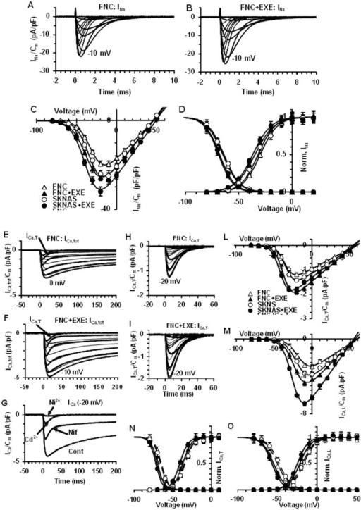 Analysis of voltage-dependent Na+ and Ca2+ channels in FNC and SK-N-AS cells.Typical INa traces recorded in a SK-N-AS cell. The voltage threshold of INa was at −50 mV (A). Effect of Exendin-4 (EXE) on INa amplitude (B). In A, B numbers represent the voltages eliciting the maximal INa. C) Normalized I–V plots represent the data evaluated at the current peak in all the cells investigated; the Boltzmann fits (Eq. 1) are superimposed to the experimental data. D) Normalized data related to INa activation and inactivation and superimposed Boltzmann fit in control SK-N-AS and under exendin-4 treatment; the Boltzmann curves for activation are determined from panel C by the equation:  and inactivation from eq. 2; Boltzmann parameters listed in Table 1. Data represent mean ± SE from 26–43 cells. Representative ICa,tot traces obtained in a control (E) and in exendin-4 treated FNC cell (F). The arrow in the −50 mV trace indicates the presence of a first component as a fast-activating current, ICa,T. High-voltage-activated and slowly inactivating current (ICa,L, HVA) as a second component starting from −40 mV. Ca2+ currents elicited by a voltage step at −20 mV without (Cont) and in the presence of nifedipine (Nif), Cd2+ and Ni2+(G). Representative ICa,T recorded at a holding potential of –50 mV without (H), and with exendin-4 (I). Normalized I–V plots determined at the current peaks in control and under exendin-4 treatment related to ICa,T (L) and ICa,L (M). Normalized activation and inactivation data for T- (N) and L-type Ca2+ current (O) in control and under exendin-4 treatment, with the related Boltzmann fit superimposed to the data. The related Boltzmann parameters are listed in Table 1. In each experimental condition, data are from 18 to 23 cells.