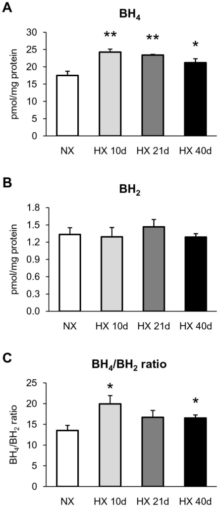 Effect of chronic hypoxia on lung levels of BH4 and BH2.(A) BH4 levels, (B) BH2 levels, and (C) BH4/BH2 ratio in lung from mice exposed to normoxia (NX) or 10, 21 and 40 days of hypoxia (HX 10d, HX 21d and HX 40d, respectively). Results are expressed as mean ± SEM from 6 experiments. * p<0.05, ** p<0.01, compared to NX.