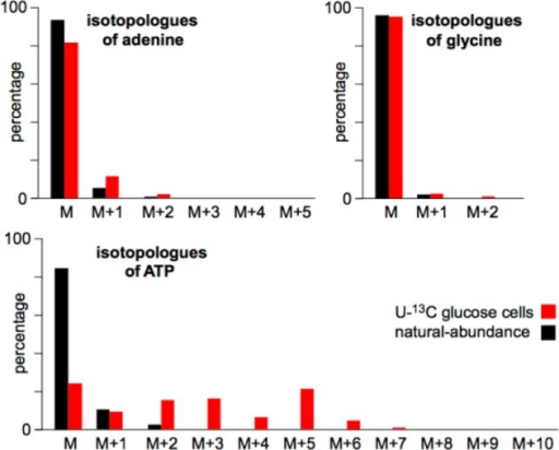 Isotopologue patterns of adenine, glycine, andATP as determinedby LC/MS. Data are from HeLa cells cultured in 50% [U-13C]glucose and 50% natural-abundance glucose for 48 h.