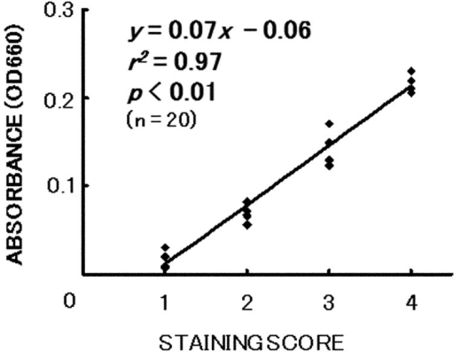 Relationship between staining score of methylene blue (MB) and absorbance values ofMB in the in vitro porcine short-term dry eye model. The solid lineis the calculated regression.
