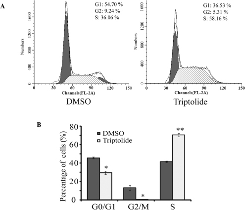 Triptolide induced neuroblastoma cell cycle arrest in the S phase. (A) BE(2)-C cells were either treated with DMSO or 25 nM triptolide for 24 h. Cells were harvested, fixed with ethanol and stained with propidium iodide. DNA content was determined by flow cytometry. (B) Analysis of cell cycle phase percentage in BE(2)-C cells from panel A. Each column represents the average obtained from three independent experiments. Data are presented as the mean ± standard deviation. *P<0.05 and **P<0.01, compared with control. DMSO, dimethyl sulfoxide.