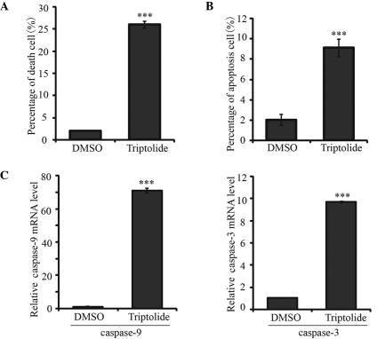 Triptolide induced neuroblastoma cell apoptosis through caspase-9/caspase-3 pathway activation. Analysis of the percentage of (A) dead and (B) apoptotic BE(2)-C cells. BE(2)-C cells were treated with 25nM triptolide for 24 h, and cell death and apoptosis were determined by trypan blue dye and Annexin V-fluorescein isothiocyanate kit, respectively. DMSO was used as a control. (C) mRNA expression levels of caspase-3 and caspase-9 in BE(2)-C cells treated with DMSO or triptolide were determined by RT-qPCR analysis. Data represent the average obtained from three independent experiments. Data are presented as the mean ± standard deviation. *P<0.05 and **P<0.01, compared with control. RT-qPCR, reverse transcription-quantitative polymerase chain reaction; DMSO, dimethyl sulfoxide.