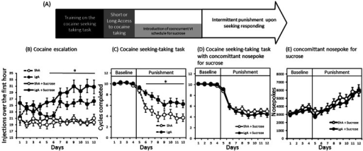 a The timeline of experiment 2. Early loading phase (first hour) during free access sessions (b). Number of cycles completed before (baseline) and during punishment of cocaine seeking responding after 12 days of 1 h (ShA white dots) or 6 h (LgA black dots) cocaine access without (c) or with (d) the availability of sucrose following a nose poke response. e The number of nose poke responses for sucrose under baseline and punishment of cocaine seeking. Average ± SEM of 17 to 37 animals per group. *Differences between groups, Tukey's HSD; p < 0.05, p < 0.05