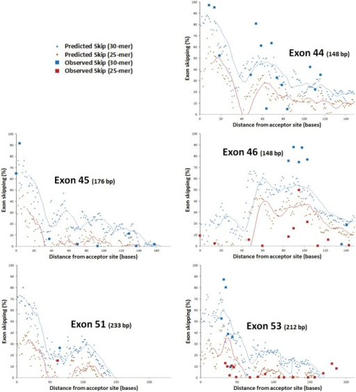 Screening across exons for predicted exon skipping and comparison with published data (from [29]).Distance from acceptor is given for the first (5'-most) base of the target site. Observed and predicted percentage skipping are shown for 30-mer and 25-mer oligonucleotides, with moving averages shown over 15 and 13 bases, respectively (in this way, the moving average indicates the value for the mid-point of each target site).