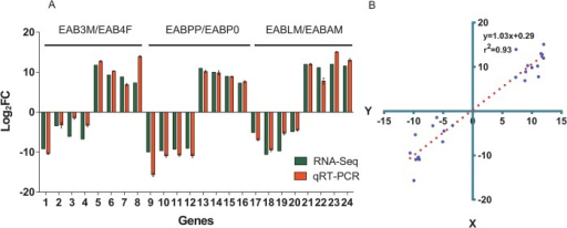 Correlation between the gene expression ratios obtained from RNA-Seq data and qRT-PCR.(A) Expression ratios (Log2FC) obtained by RNA-seq and qRT-PCR. The expression ratio change was calculated by the 2-ΔΔCT method. TEF-1α was used as a reference gene to normalize the qRT-PCR data. Error bars represent the standard error of the mean (n = 4). Investigated genes were listed in S5 Table, including 1, EABT36748; 2, EABT26334; 3, EABT1664; 4, EABT37717; 5, EABT755; 6, EABT22472; 7, EABT11324; 8, EABT14053; 9, EABT30570; 10,EABT27511; 11, EABT36884; 12, EABT35689; 13, EABT19583; 14, EABT23189; 15, EABT23473; 16, EABT4817; 17, EABT14338; 18, EABT16135; 19, EABT21639; 20, EABT4315; 21, EABT37729; 22, EABT33854; 23, EABT7214 and 24, EABT36743. (B) Lineage analysis between RNA-Seq and qRT-PCR. The Log2FC obtained by qRT-PCR (x-axis) are plotted against the Log2FC obtained by RNA-Seq (y-axis).
