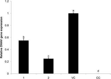 Replication DHAV gene expression in DEHs. Effect of 1 and 2 on DHAV replication. DHAV gene expression of the VC group was set to 1 and that of the BC group was set to 0. The different letters on a column differ significantly (p < 0.05)