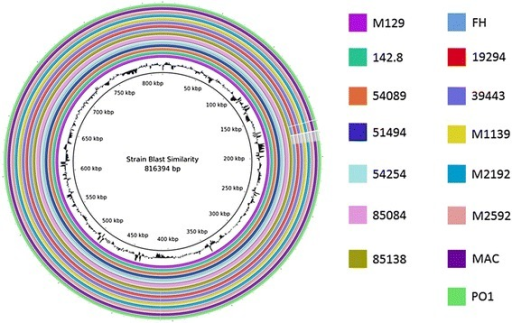 Overall sequence identity of the 15 sequenced strains with the reference M129 genome. BLAST-based similarity of a given strain versus the M129 reference is represented as a colored ring. Colors by strain are indicated to the right. Solid coloration indicates >99 % identity and transparent grey indicates approximately 95 % identity. Location in the reference genome is indicated by numeration on the inside of the ring. GC content in the reference genome is indicated by the black bar graphs between the genomic coordinates and the colored rings (bars pointing toward the outside of the circle indicate high GC content). Note that genomic structural alterations are not visible using this method