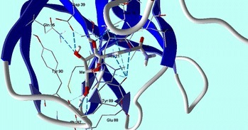 Ribavirin shows hydrogen bonds interactions with CVB4 2A Proteinase enzyme (PDB: 1Z8R) active site