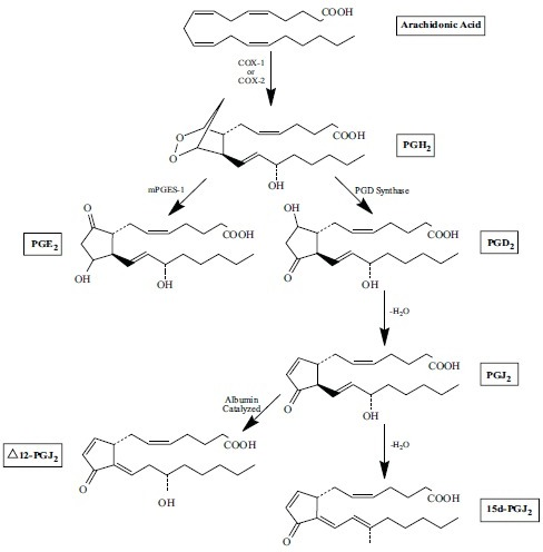 Prostaglandin synthesis pathways. Following the activation of PLA2 by pro-inflammatory cytokines, arachidonic acid is liberated from cellular membranes. COX-1 and COX-2 convert arachidonic acid to the unstable prostaglandin PGH2. PGH2 can be converted to the pro-inflammatory prostaglandin PGE2 by mPGES-1 or converted to PGD2, a prostaglandin with well-known anti-inflammatory effects. These effects are mostly due to further non-enzymatic conversions of PGD2 to PGJ2 and then 15d-PGJ2. Intriguingly, PGJ2 can also convert to Δ12-PGJ2 in the presence of albumin.