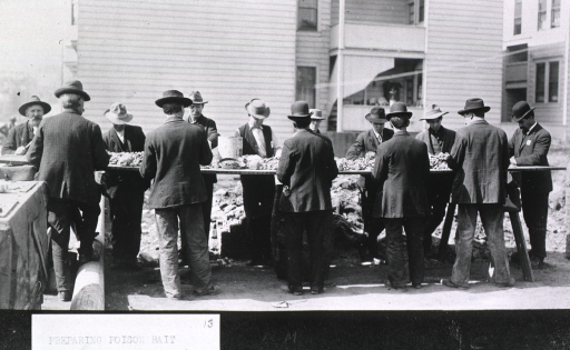 <p>Group of 13 men standing outdoors around a makeshift table applying poison to bread used as rat bait during the San Francisco plague campaign.</p>