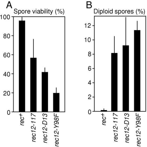 Formation of aneuploid meiotic products. (A) Spore viabilities. (B) Frequencies of diploid meiotic products. Data are the mean ± standard deviation from six separate experiments involving crosses of strains WSP0602 × WSP0603; WSP0079 × WSP1799; WSP1813 × WSP1819; and WSP1556 × WSP1559.