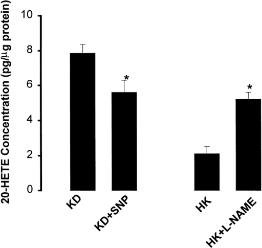 The 20-HETE concentrations in the isolated mTALs from rats on a K-deficient diet in the presence of 20 μM SNP and in the absence of SNP and from rats on a high-K diet in the presence of and in the absence of 0.2 mM L-NAME. The extracellular Ca2+ concentration was 1.8 mM.