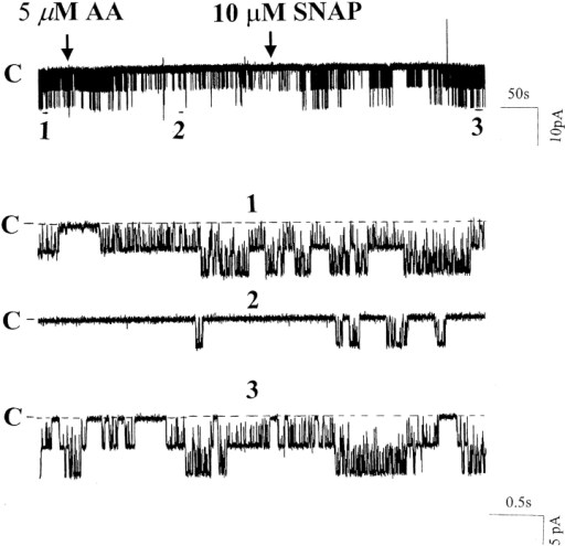 A channel recording showing the effect of 5 μM arachidonic acid on the activity of the 70-pS K channel in the presence of 10 μM SNAP. The experiment was performed in a cell-attached patch in the mTAL from a rat on a high K diet, and the pipette holding potential was 0 mV. The top trace shows the time course, and three parts of the trace are extended to demonstrate the fast time resolution.