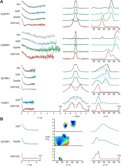 DEER characterization of nucleotide-dependent domain movements of MTSSL labeled MnmE (E287R1, D366R1, S278R1, and I105R1).(A) Left panel, background corrected dipolar evolution data for the apo, GDP, GppNHp, and GDP-AlFx state of the respective MnmE mutants as indicated. Centre panel: dipolar spectra (Fourier transformation of the dipolar evolution data in the left panel). Right column: distance distributions obtained by Tikhonov regularization. All plots are normalized by amplitude. Broken lines in the left and center panel are fits to the data obtained by Tikhonov regularization. For S278R1 in apo, GDP, and GDP-AlFx state, alternative fits and resulting distance distributions obtained with smaller regularization parameters α, are shown in corresponding pale colours. (B) Data for S278R1 in the GDP-, GppNHp-, and GDP-AlFx state analyzed assuming a sum of Gaussian distributed conformers. Left panel: background corrected dipolar evolution data. Centre panel: goodness-of-fit (χ2) surfaces, created by random sampling of distance and width for each Gaussian population in the distance distributions shown in the right panel. Plots in the left and right column are normalized by amplitude. Broken lines in the left panel are fits to the data.
