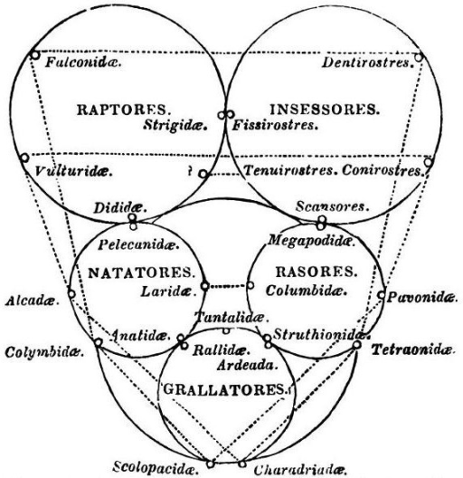 Quinarian System Of Birds From Volume 2 Of William Joh