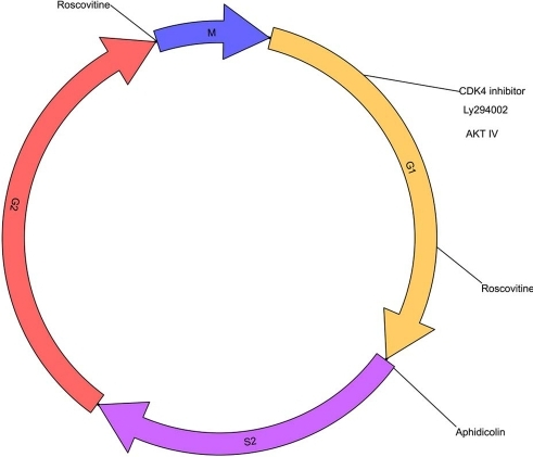 Cell Cycle Chart And Cell Cycle Inhibitors Activityh Open I
