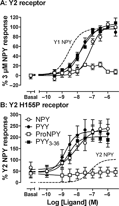 Y2 receptor–β-arrestin2 interaction and its restoration by H155P substitution. Concentration–response curves from pooled analysis data (vesicle intensity/cell; n= 4–6 experiments) show agonist-stimulated β-arrestin2 BiFC in stably transfected cells expressing Yc-tagged Y2 receptors (A) or the Y2H155P mutant (B). Both Y2/β-arr2 and Y2H155P/β-arr2 cells expressed similar numbers of receptors (Table 2), and Y2H155P/β-arr2 BiFC responses were normalized with reference to Y2/β-arr2 controls in each experimental plate. Dotted curves illustrate the positions of the Y1/β-arr2 (A) or Y2/β-arr2 (B) NPY concentration–response curves for comparison. ProNPY is [Leu31, Pro34]NPY.