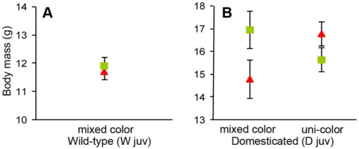 Mean ± SE of body mass measured after manipulating males during the juvenile period.All males were housed in groups of four males with four females during this period, and within each experimental group the four males were either all wearing the same color bands (uni-color; i.e. all green or all red) or there were two males of each color (mixed color). Symbol colors represent the color assigned during the experiment. (A) shows the data for the wild-type and (B) for the domesticated population.