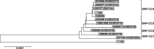 Neighbor-joining tree based on 1,130 concatenated ORFs of ten representative isolates (gray) and reference strains O26:H11 (11368) and O111:H− (11128) (white). The SNP clonal clusters (SNP-CCs) are marked and demonstrate the quartering of the phylogenetic tree. Phylogenetic analysis generated by MEGA5 (Tamura et al. 2011).