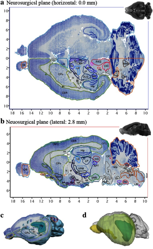 Representative examples of arbitrarily cut virtual sections and brain surface view using the 3D atlas. Brain sections can be virtually cut in any plane. The resulting sections display annotated Nissl images with outlines of brain regions and corresponding MR images. a, b, and c A horizontal, sagittal, and obliquely cut sections, respectively. d A combined view of surface of the cerebral cortex (labeled by yellow green) and some internal structures (olfactory bulb by yellow and hippocampus by green/blue). 3V third ventricle, 7N facial nucleus, 7n facial nerve, AA anterior amygdaloid area, AcbC accumbens nucleus, core, AH anterior hypothalamic area, APT anterior pretectal nucleus, AV anteroventral thalamic nucleus, cc corpus calosum, CER cerebral cortex, CIC central nucleus of the inferior colliculus, Cl claustrum, CPu caudate putamen, DC dorsal cochlear nucleus, DLG dorsal lateral geniculate nucleus, fmi forceps minor, Hb habenular nuclei, Hip Hippocampal formation, ic internal capsule, icp inferior cerebellar peduncle, InG intermediate gray layer of the superior colliculus, Lat lateral cerebellar nucleus, LD laterodorsal thalamic nucleus, ll lateral lemniscus, LP lateral posterior thalamic nucleus, LRt lateral reticular nucleus, LS lateral septal nucleus, LSO lateral superior olive, mcp medial cerebellar peduncle, Med medial cerebellar nucleus, Me medial amygdaloid nucleus, MGV medial geniculate nucleus, ventral part, OB olfactory bulb, opt optic tract, PAG periaqueductal gray, VPL ventral posterolateral thalamic nucleus, VPM ventral posteromedial thalamic nucleus, Rt reticular thalamic nucleus, scp superior cerebellar peduncle, sm stria medullaris of the thalamus, SNC substantia nigra, compact part, Sp5 nucleus of the spinal trigeminal tract, sp5 spinal trigeminal tract, ZI zona incerta