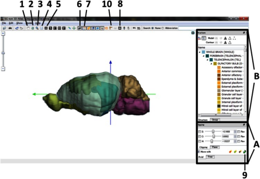 "A guide to using the ""SG-eye 3D Atlas"" software. The active buttons in the menu bar are labeled (1–10). The functions of these buttons are explained in the Electronic Supplementary material and can be visualized in the tooltip window. Coronal sections can be visualized by manipulating the bottom rightcorner panel (labeled A). Specifically, the boxes labeled ""C"" and ""Move with"" in the ""Clipping"" and ""Plane"" modes in the ""Axial"" tab must be clicked. The ""C"" slider can be moved to change levels along the rostro-caudal axis. The numbers indicated in the boxes to the right of the sliders are the distance in mm from the interaural zero line. These numbers are either positive or negative to signify the rostral and caudal positions relative to the zero line, respectively. Sagittal and horizontal sections can be obtained in a similar fashion (click the ""S"" box for sagittal, or the ""H"" box for horizontal). 3D image or outlines can be removed or added by clicking the appropriate buttons (labeled 6 and 7). MR images can also be visualized by clicking the appropriate button (labeled 8). Coordinate transformations can be performed in the ""Free"" tab in the bottom right control panel (labeled A). These transformations can be performed on any combination of Nissl sections, MRI planes, and outlines by clicking the appropriate buttons (labeled 2, 6, 7, and 8) and for any plane of sections by clicking the appropriate buttons (the C, S, and H buttons). The hierarchical organization of the brain structures is indicated in the middle right panel (labeled B). Representative structures are indicated with unique colors in the image"