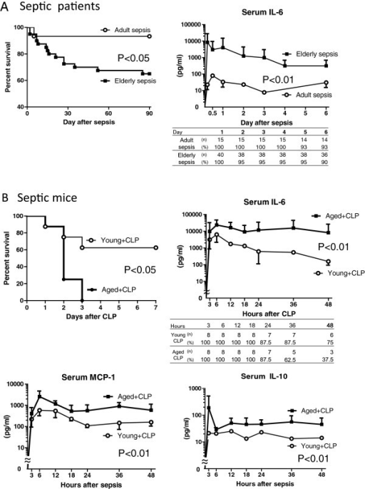 Decreased survival and prolonged elevation of serum pro- and anti-inflammatory cytokines in severe sepsis in elderly patients. (A) Left, survival rates of adult and elderly patients with sepsis; right, serum concentrations of IL-6 after diagnosis. (B) Upper left, survival rates of aged and young mice after cecal ligation and puncture (CLP) (P = 0.015, n = 8 per group); serum concentrations of IL-6 (upper right), monocyte chemoattractant protein-1 (MCP-1) (lower left) and IL-10 (lower right) in young and aged mice after CLP (P <0.01).