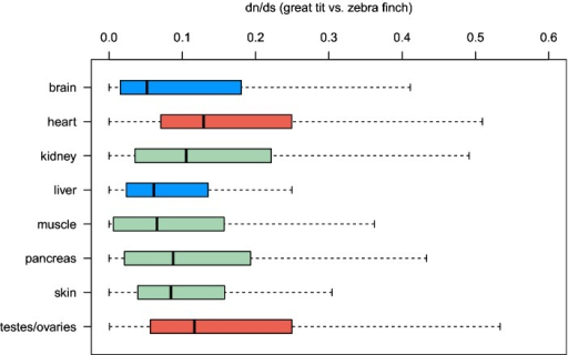 Boxplots of evolutionary rates for subsetsof genes specifically expressed in certain tissues; boxes in blueand red denote significantly reduced and increasedvalues, respectively. Whiskers were drawn as implemented in theR-function boxplot (see Materials andMethods).