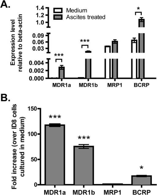 Ascites treatment increases expression of MDR1a/b and BCRP in ID8 cells.Total RNA was harvested from ID8 cells in normal culture as well as from ID8 cells pre-treated with ascites for 7 days. Expression levels of the indicated genes (relative to beta actin) were determined by real-time PCR(A). Fold increases in gene expression (ascites treated ID8 cells over normal ID8 cells) are shown in B. Three independent experiments were performed and error bar represents SD. * indicates p<0.05 and *** p<0.001, Student's t-test.