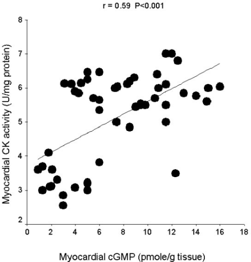 Linear regression curve for myocardial cGMP and myocardial creatine kinase (CK) activity.