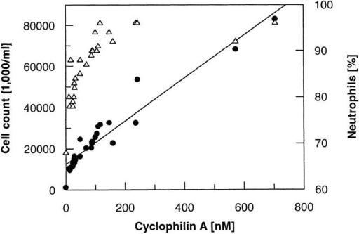 Correlation of cyclophilin-like protein concentration with  total cell counts in synovial fluids of RA patients (filled circles) and with  percentage of neutrophils (open triangles).