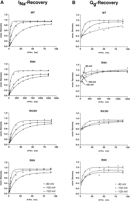 Comparison of the recovery of ionic current and gating charge of WT and mutant sodium channels at different potentials. Sodium current recovery (left panel) and gating charge recovery (right panel) at recovery potentials of −80, −100, and −120 mV in WT-, R4H-, R4/5H-, and R5H-sodium channels. The data of each subdiagram were recorded from different oocytes and normalized as described in Fig. 5. Notice the different starting points of gating current recovery in R4H that strictly depend on the effective recovery potential (indicated by arrows). Corresponding sodium current (INa) and gating charge (Qg) recovery time constants obtained from single exponential fits are as follows (INa/Qg in ms): WT, 22.8/54.9 (−80 mV), 7.6/16.7 (−100 mV), 2.1/6.4 (−120 mV); R4H, 359/113 (−80 mV), 228/269 (−100 mV), 59.7/349 (−120 mV); R4/5H, 25.4/39.7 (−80 mV), 14.9/20.6 (−100 mV), 8.4/9.5 (−120 mV); R5H, 16.3/12.6 (−80 mV), 8.0/11.6 (−100 mV), 3.8/6.9 (−120 mV).