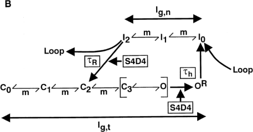 Model of sodium channel fast inactivation controlled by S4D4. (A) Schematic illustration of our interpretations and conclusions displaying the relevant structures of the sodium channel and their movements at closed, open, and inactivated states as well as during recovery from inactivation. The positively charged amino acids of the S4 voltage sensors in domains 2–4 and the analyzed mutations in S4D4 are indicated. R symbolizes the putative receptor site in the S4–S5 linker of domain 4, which binds the docking region (D) of the inactivation loop connecting domains 3 and 4 (L3–4), leading to fast inactivation of the channel. Moreover, the position of L3–4 during inactivation causes the partial immobilization of the voltage sensors (most probably S4D4 and S4D3; see discussion), which is indicated here as blockade of m by B. (B) State diagram with lower level reflecting the voltage-dependent activation pathway from several closed (C) to the open state (O) and further to the open state (OR), which presents the receptor instantly followed by the voltage-independent binding of L3–4. The upper level reflects the transitions between several inactivated states producing the nonimmobilized gating current fraction. For recovery from fast inactivation, hyperpolarization causes the reverse movement of S4D4, which disrupts the connection of the inactivation loop to its receptor and simultaneously causes the partial immobilization of the voltage sensors, thereby permitting the return of the channels into the resting (closed) state.
