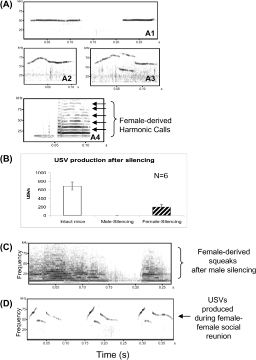 Males and females call differently during male-female interaction in Exp. 2, 4 and 5.(A) Representative sonograms of mouse ultrasonic vocalizations produced during male-female interaction. 4A1: flat USV, 4A2: frequency-modulated sine-wave-like USV and 4A3: broken USV, and 4A4: breached-harmonic USV. 4A5: human audible dense-layered squeaks. (B) No USVs were detected when male were silenced by simple mouth taping; but when females were silenced, many USVs were detected, suggesting that USVs recorded during male-female interaction were emitted from the male. (C) After aggressive attacks from male mice, females produced a few squeaks, observed on sonograms as harmonic dense-layered calls. (D) When reunited with another female after 4 hour's separation as described before [73], female mice emitted frequency-modulated USVs as those produced by male mice during male-female interaction. Three representative broken USVs were shown.