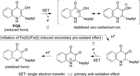 Proposed mechanism of the primary anti-oxidant effect and the secondary pro-oxidant effect of PQS.