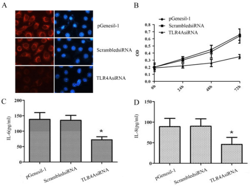 TLR4 expression and functional effect after TLR4 knockdown in human breast cancer cell line MDA-MB-231. A, immunofluorescence analysis of gene-specific siRNA on TLR4 protein expression in pGenesil-1 vector, ScrambledsiRNA and TLR4AsiRNA transfected cells. Nuclear staining was performed using DAPI (blue) (200×). B, MTT analysis of the proliferative rate of pGenesil-1 vector, ScrambledsiRNA and TLR4AsiRNA transfected cells. C and D, IL-6 and IL-8 presence in the supernatant secreted by pGenesil-1 vector, ScrambledsiRNA and TLR4AsiRNA transfected cells. Cell supernatant was analyzed using flow cytometry. All results are representative of three separate experiments.