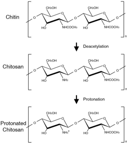Molecular structures of chitin, chitosan, and protonated chitosan polymer.