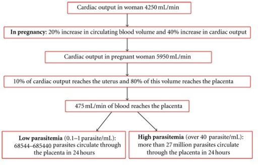 Estimation of T. cruzi contact with the placenta in infected mothers.